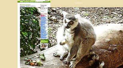 oversized image of a Lemur.