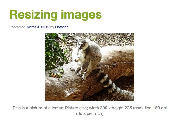 wordpress image of a lemur
