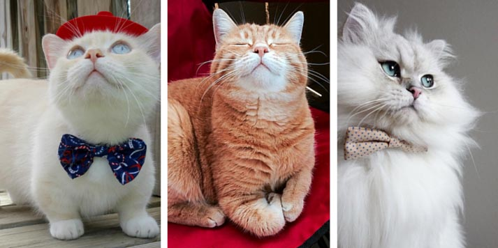 three famous instagram cats