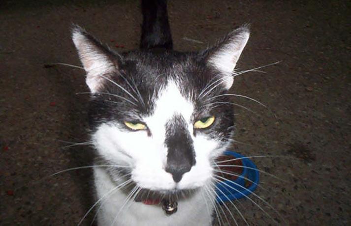 unimpressed cat