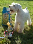 Photo of winning dog
