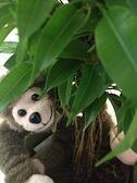 Flying Monkey in tree - Noisy Little Monkey Prize