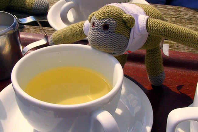 Monkey with a cup of tea