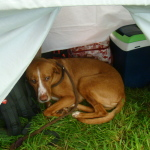 A grumpy Mr Dog photo