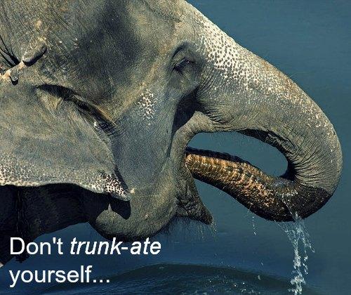Don't trunkate yourself elephant