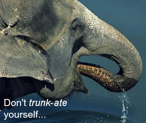 Don't trunkate yourself elephant