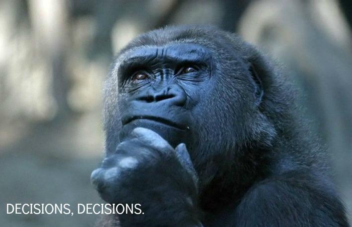 Gorilla-Thinking.jpg