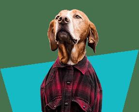 Mr Dog -VP Shaking
