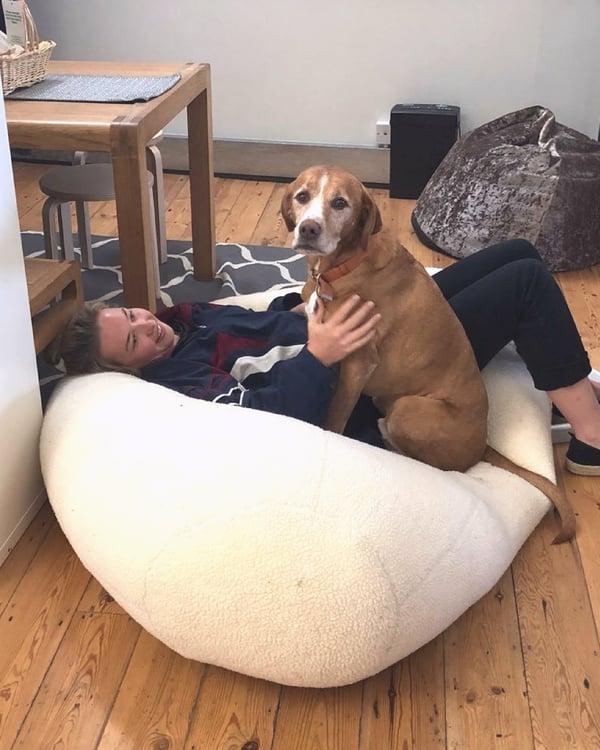 Mr Dog sat on Gertie in beanbag