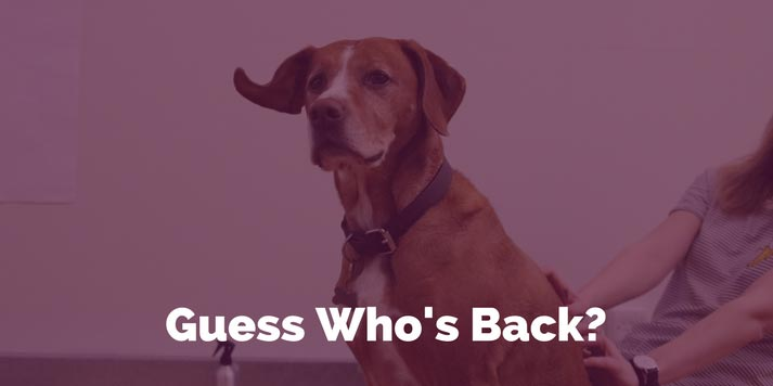 dog-blog.jpg
